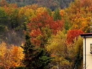 I colori dell'autunno a Sant'Andrea di Conza