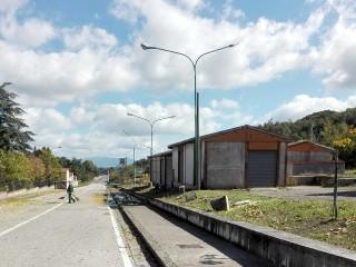 Tagliati i pioppi in Via Battisti di Sant'Andrea di Conza (1)