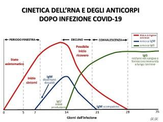 Cinetica dell'RNA