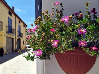 Fiori in Via Battisti